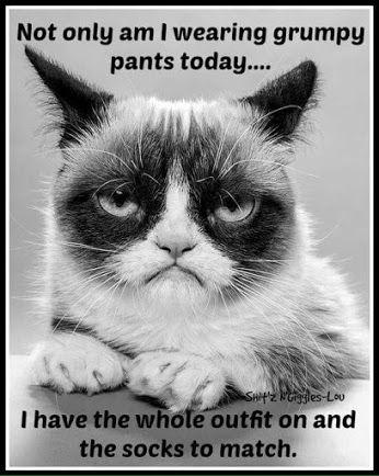 cd77b7d8e67160e6a77b5c18afaeb187--grumpy-cat-humor-grumpy-kitty